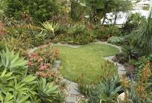 Best gardens - Aloes at Taringa House garden, Brisbane