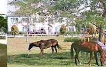 Legoland Hotel Accommodations in Malaysia / The Singapore Horse Riding club with state-of-art infrastructure ensures safe and secure learning. Availability of lush green field and plenty of turn out and paddock facilities for horses makes riding more enjoyable.