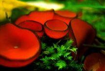 mushrooms / by Virgie Fisher