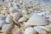 Tengeri csillag - Kagyló, Starfish - Shell, Seestern - Muscheln