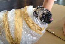 Pug costumes