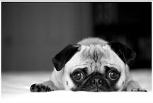I love pugs / by Vanessa Schwartz