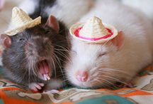 animals wearing... / by Holly Hagen