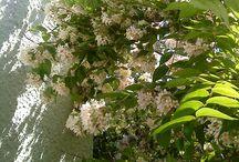 My little garden / In my garden