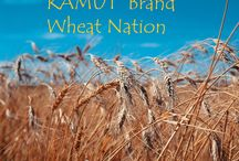 KAMUT® Brand Wheat Nation / Making something with #KAMUT® Brand Khorasan Wheat? Share it here! Off topic pins will be deleted, to be added as a pinner leave us a comment. Thanks! / by Kamut International