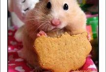 Dieta / Dimagrire felicemente