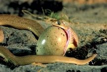 slang eet ei en spuugt schil uit
