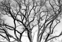 Trees / I am obsessed with trees. period. / by Tracey Wishik