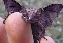 Baby Dragons