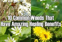 weeds for healing