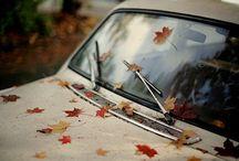 Autumn / Fall