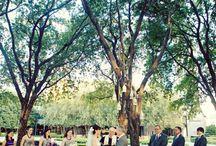 Outside Weddings  / Outdoor Weddings   Vintage Wedding    Purple and Silver wedding colors   Posh Floral Designs