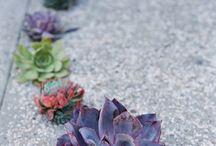 Succulent Gardens / # Succulent #Gardens and #Landscape #Design #Ideas - #Front-yard #Backyard