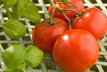 Gardening-Vegetables