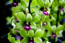 orchideeën  ❤