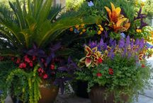 Flowers, gardens, and patios