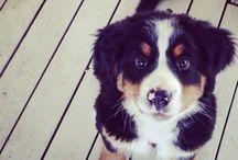 Puppies!!! & other adorable animals! / by Alyssa Maietta