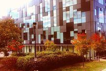 Fall at #YorkU