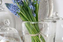 Muscari - Blauwe/Witte Druifjes