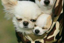 Love dog's