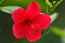 flowers / There are 100's of species of flowers in this resort