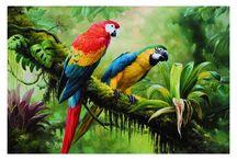coleccion de aves