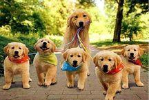 Zvířata / Psi,kočky a jiná zvířata