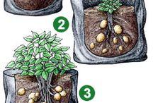 Groeten en Fruit kweken