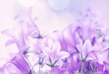 Flowers / by Shari Furtak