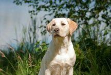 Ihanat koirarodut