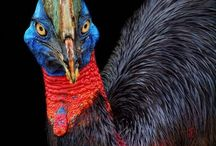 Peacocks, pheasants, storks
