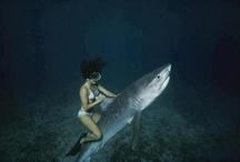 Undersea pics!
