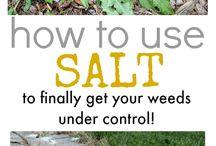 How to use salt in garden