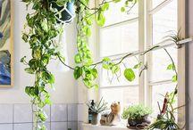 植物とインテリア