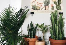 House // Plants
