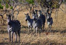 Africa!!!