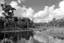 Nature of Florida / by Florida Memory