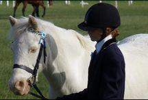 Dream / Littlecreampony Dream the 12.2 welsh pony
