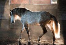 For Kim / Horses