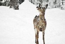 cute animals / by Natalie Lyon