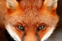 Fox / by Susy Linares