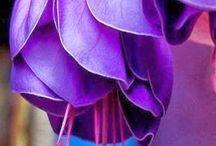 Virágözön / minden szépséges virág táblája