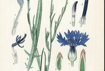 Inspiration: Flora | Fauna