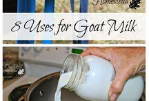Goat Milk Ideas