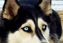 Favorite dogs