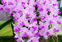 Beutiful Orchids
