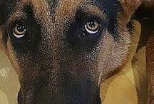 dogs-stress