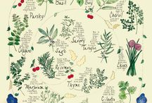 Herbs and Herbal / by Troy Robinson