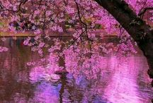 Think Pink / by Lori Lewis