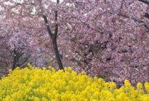 Four Seasons of Japan